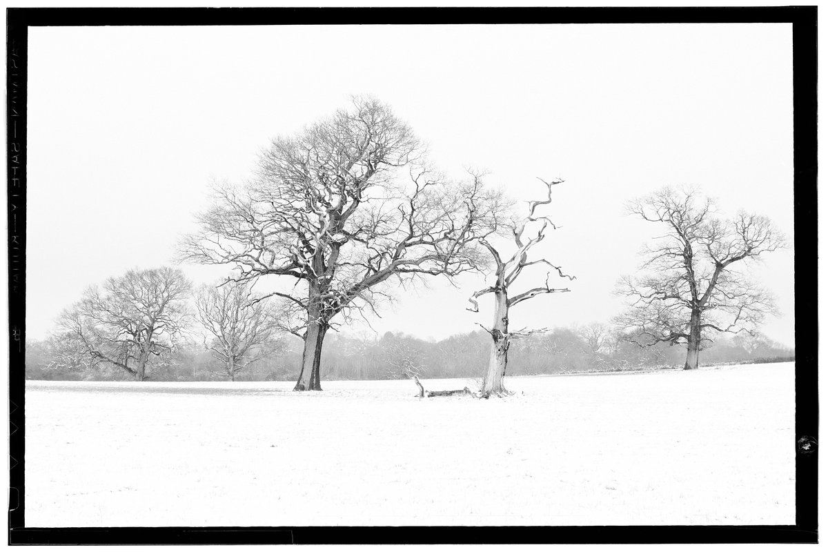 """Snow over Merryhill"" By Skopta  #bushey #merryhill #watford #Chiaroscuro #bwstyleoftheday #monotone #monochromatic #noir #fineart_photobw #blackandwhite #bnw #monochrome #instablackandwhite #bw_society #bw_crew #bwwednesday #insta_pick_bw #bwstyles_gf #bwstyleoftheday #monotone"