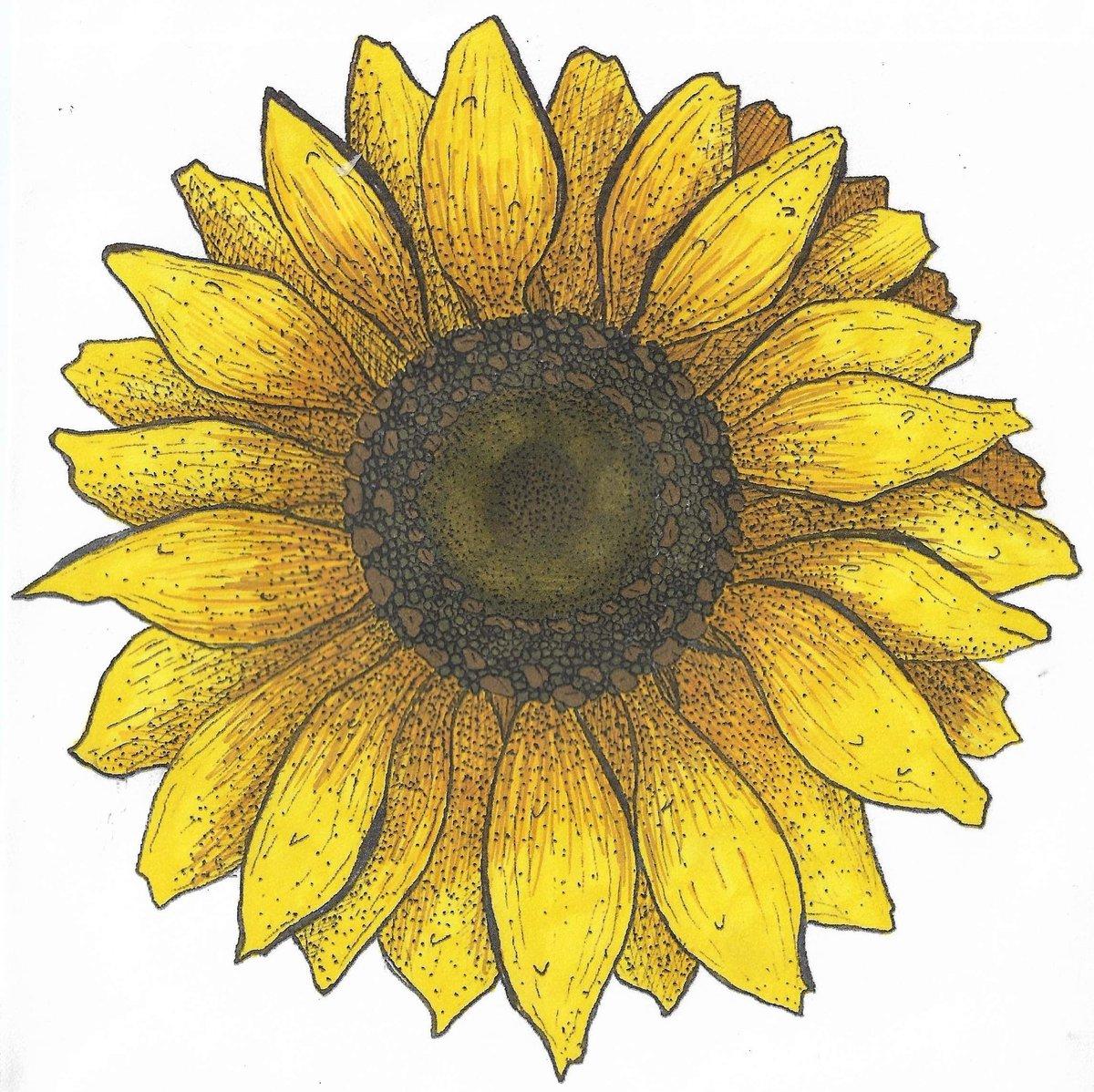 🌻 sunflower 🌻  #Illustrator #Flowers #ArtistOnTwitter