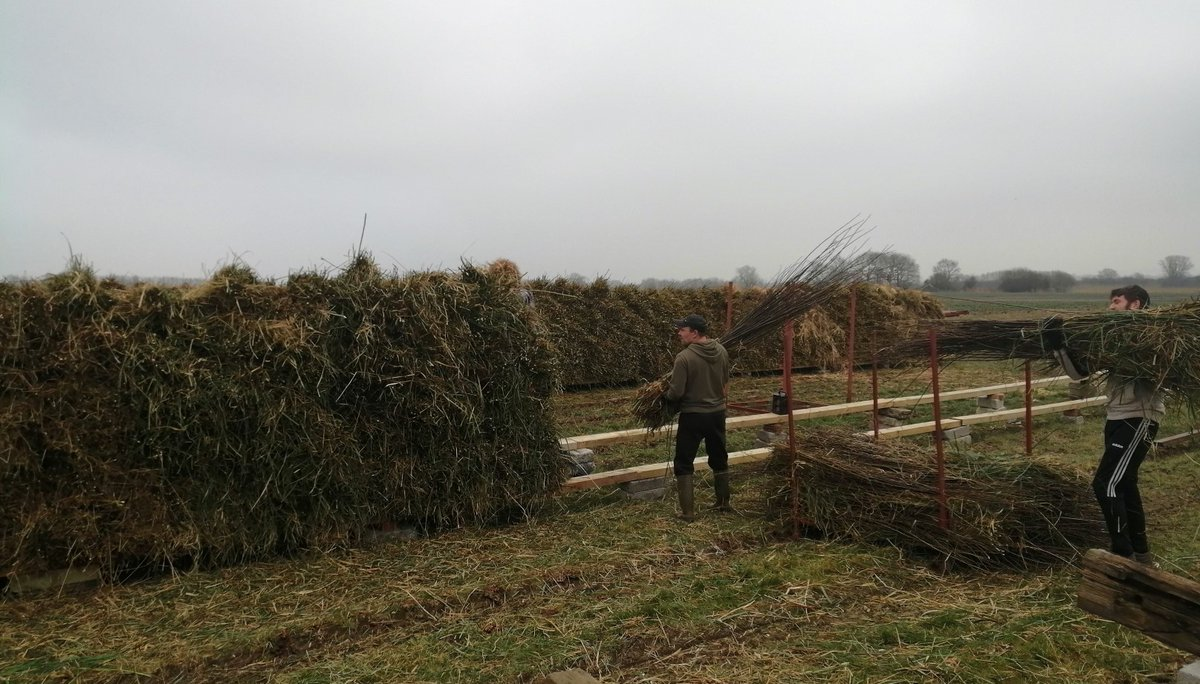 It's a really busy time of year on our farm as the willow harvest continues. Tractor loads of rods need to be stacked on telegraph poles to dry #Somerset #willow #harvest #sustainable