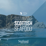 Image for the Tweet beginning: Scotland's seafood industry is focused