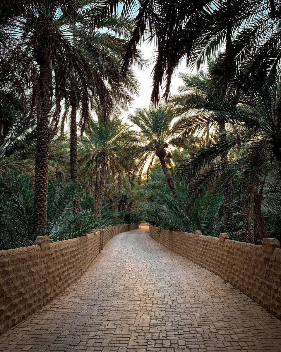 Highly recommended: An endless walk under the shade of thousands of palm trees 🌴🌴🌴 ⁣ Who can name this nature filled haven in #AlAin?⁣ #StaySafe #InAbuDhabi #AlAinOasis⁣ 📸 a.c.h.r.i.s.t.y/Instagram https://t.co/RPVK9jOOHX