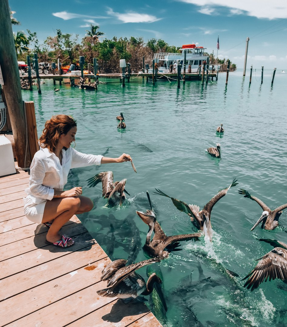 Taking a moment to appreciate all of Islamorada's wildlife, from dazzling dolphins to pesky pelicans 😉  #WorldWildlifeDay  📸 katerinandyinon 📍 @RobbiesMarina