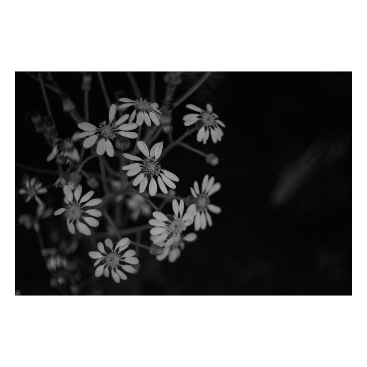 沈黙。 #写真 #ファインダー越しの私の世界  #写真シェア #写真好きと繋がりたい #monochrome #モノクロ #モノクロの世界 #Nikon #Z6 #Summitar #沖縄 #お写ん歩  #vsco #花