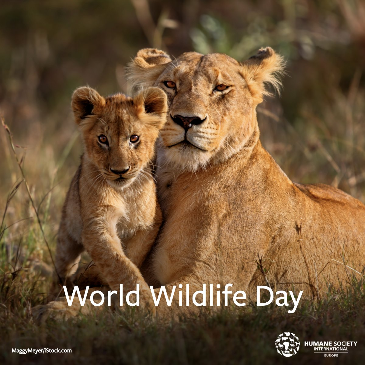 #WorldWildlifeDay