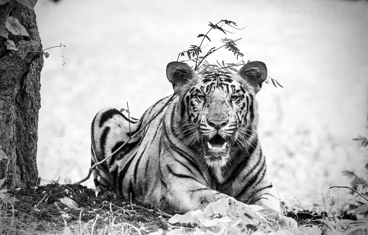 It is World Wildlife Day and this is my first post in this account, dedicate this post and thank everyone in the frontline protecting the world's wildlife and biodiversity. . 2020 was the difficult year for human but for the nature it's breathing space that was need for that 100