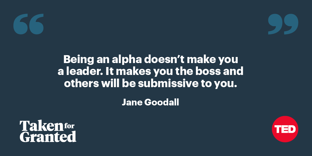 Did you know that in the chimpanzee world, aggressive alpha males have shorter reigns than compassionate ones? Join @JaneGoodallInst and @AdamMGrant as they share how other primates can teach us to be better leaders. Listen to Taken for Granted on Stitcher: