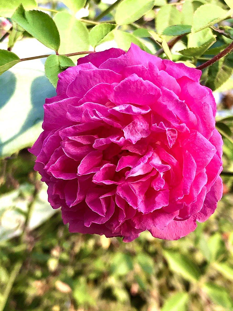 Buenos días. Les deseamos un miércoles muy alegre y productivo ☀️🤩😎 #RoseWednesday #Flowers