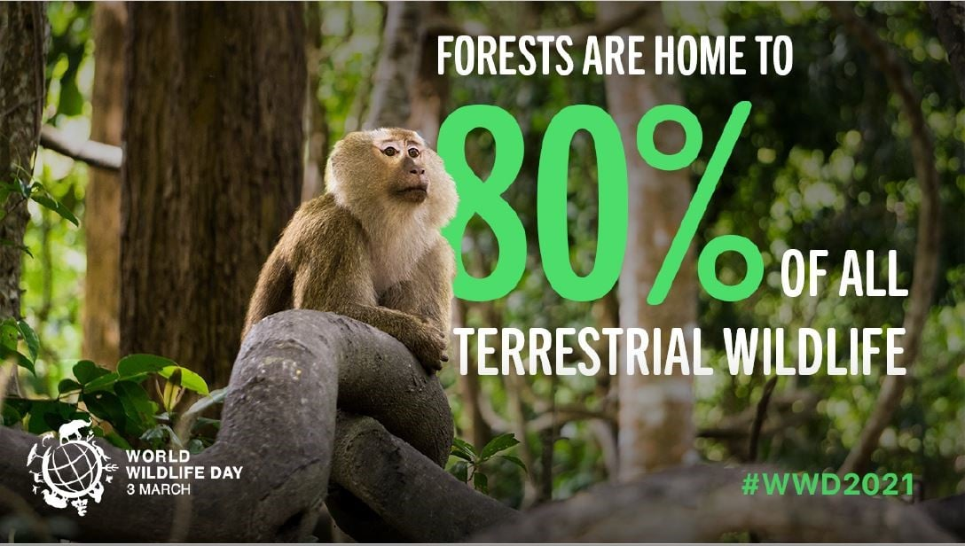 Today is #WorldWildlifeDay  This year´s theme is #Forests and #Livelihoods sustaining people and planet 🌎🌳🌲🌴  At @UNFCCC @COP26 and CBD #COP15 we must come together to take joint #climateaction to avoid #biodiversity loss and restore our #ecosystems  #WWD2021 #COP26