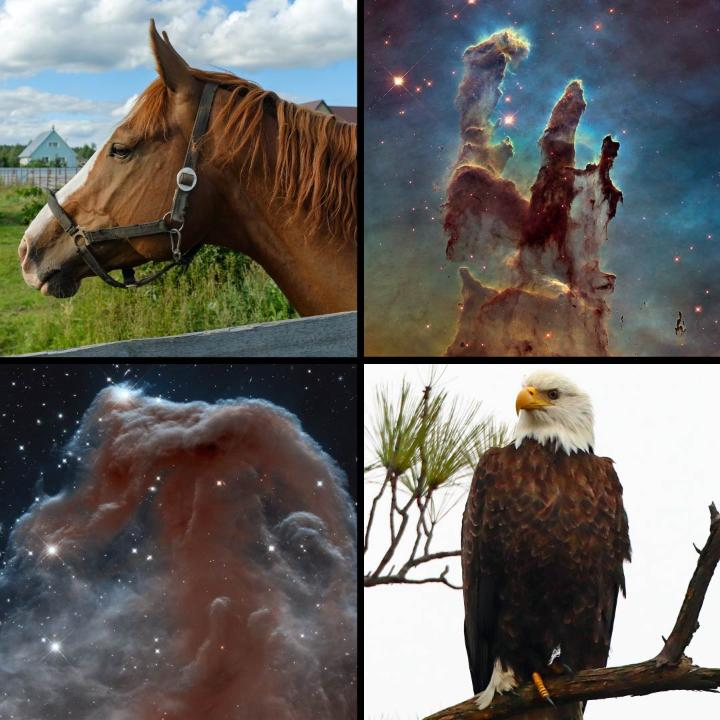 Happy #WorldWildlifeDay! 🐾 🌍 🐦  Earth is full of incredible creatures, but Hubble spotted some animal friends out in the universe, too!