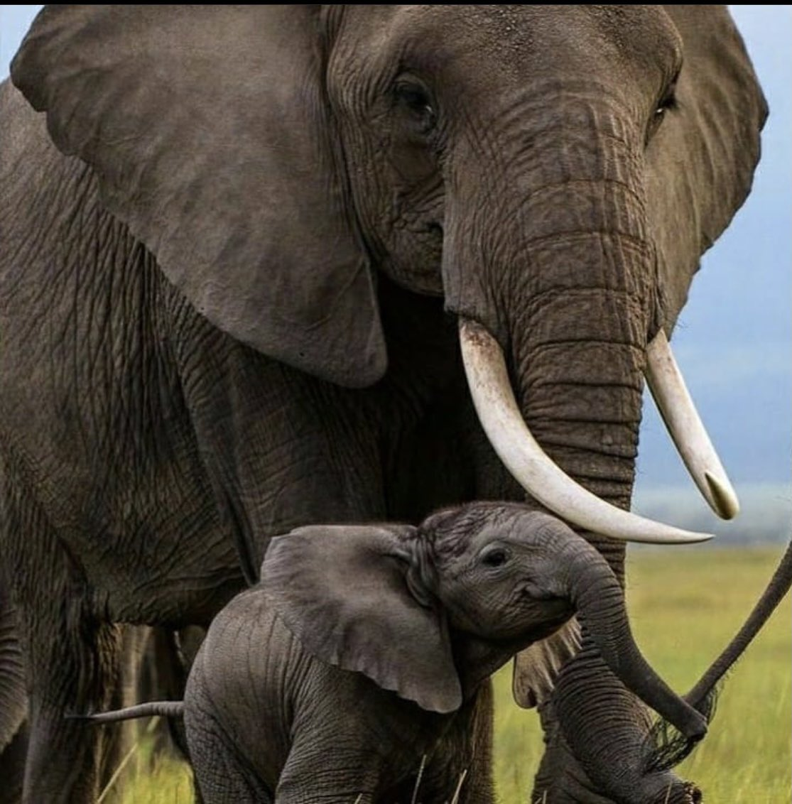 Happy #WorldWildlifeDay   Climate change is central to good #mentalhealth   Elephants are deeply compassionate and emotional animals, we love their parenting qualities and playfulness especially in water  #Africa