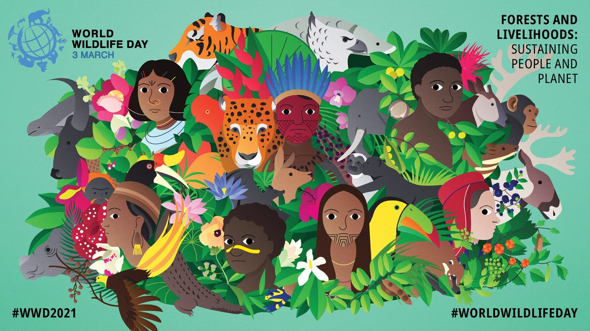 Forests, forest species & ecosystems have a central role in sustaining the livelihoods of hundreds of millions of people, particularly Indigenous & local communities.  #DoOneThingToday to support forest communities and conserve forest wildlife. #WorldWildlifeDay #WWD2021