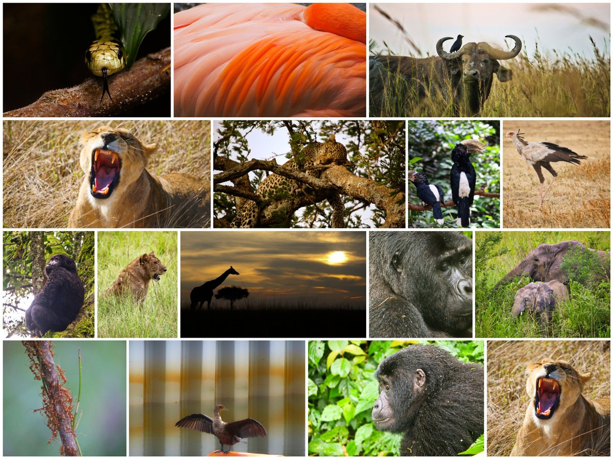 On #WorldWildlifeDay, any purchase in my #picfairstore will be 100% donated for #wildlifeconservation in the #MexicanCaribbean  #picfair #gomealmx #photographer #thephotohour #StormHour  Visit my store, get a nice #photo, and #support #wildlife 🐼🐘🦁🐯👇