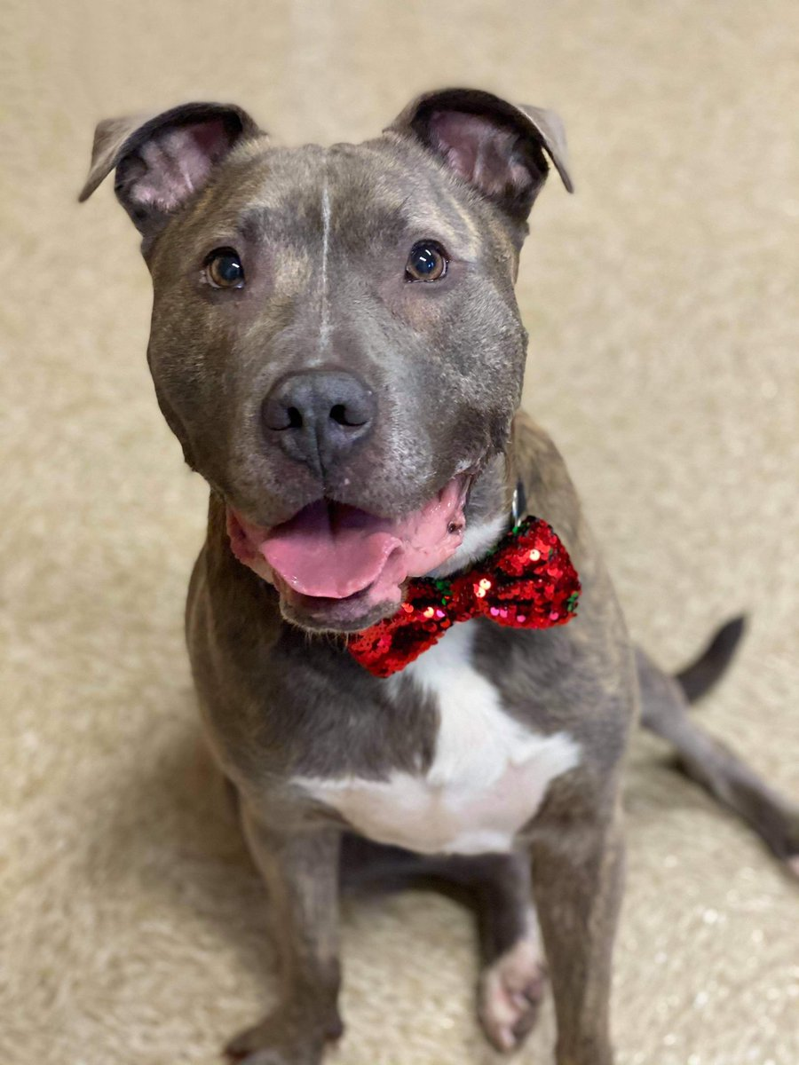 Please open your heart and give Curtis the chance he truly deserves!   #rescueonly #forgottendsoulhour #TeamZay @SilentV91140832 @GRShares   Town of Brookhaven Animal Shelter 300 Horseblock Road Brookhaven, NY 11719 (631) 451-6950