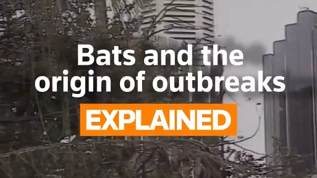 The COVID-19 outbreak started with bats, and many deadly viruses in the past have also originated from bats, including the Ebola outbreaks in Western Africa. But what makes these flying mammals such ideal hosts for disease-causing viruses? https://t.co/Lw36hHmRbp https://t.co/5uvmtxJd8B