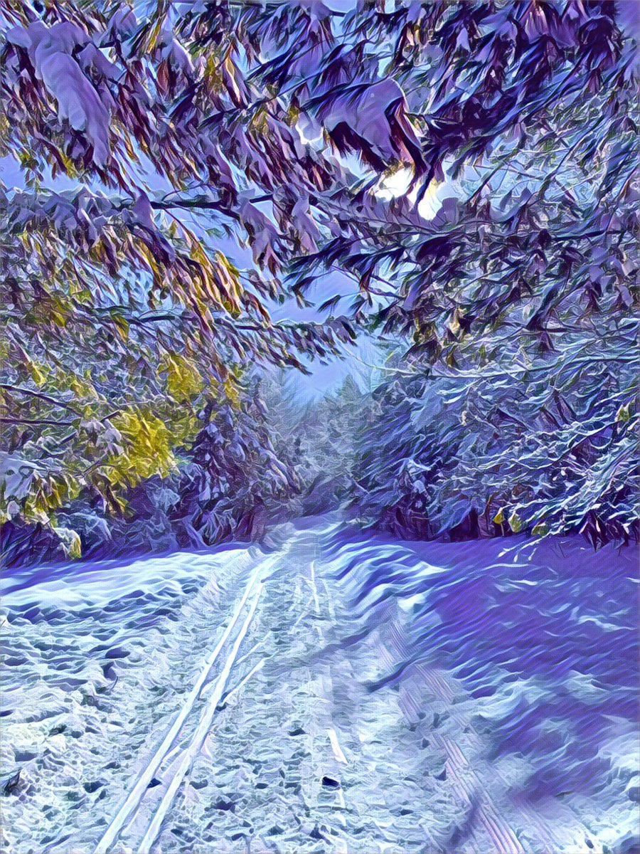 Wintertime beauty ❄️  #winter  #ottawa #canada #myottawa #colours #instalike #instagood #instadaily #colour #prisma #painterly #shotoniphone  #nature #forest #healthylifestyle #healthy #walkinthewoods #walk #walking #walkinginawinterwonderland #winterscene