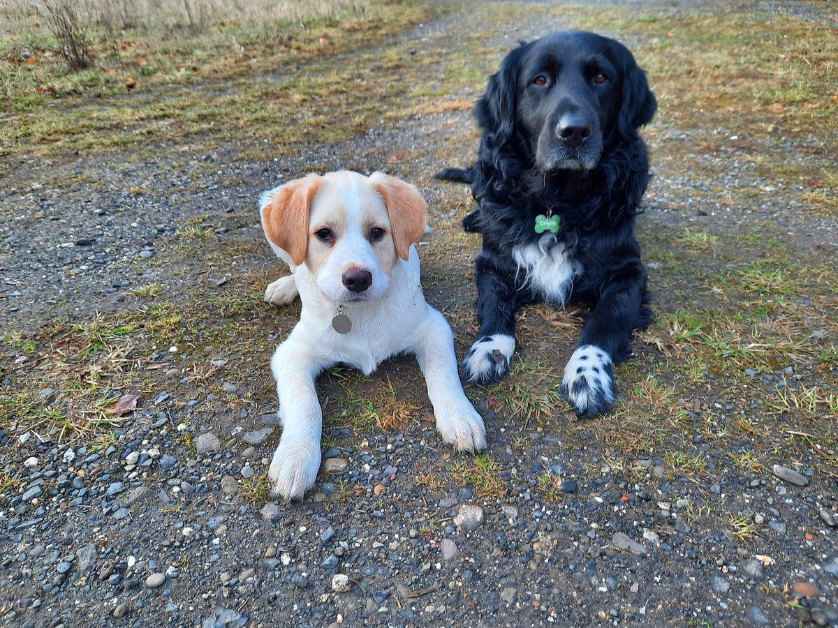 """""""Wir schenken unseren Hunden ein klein wenig Liebe und Zeit. Dafür schenken sie uns restlos alles, was sie zu bieten haben. Es ist zweifellos das beste Geschäft, was der Mensch je gemacht hat.""""  (Roger Caras)  #dog #dogslife #life #ilovemydog #ilovemydogs"""