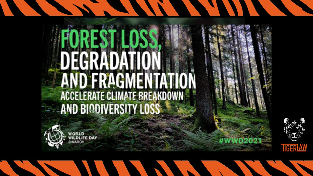 Forest loss, degradation and fragmentation accelerate climate breakdown and of biodiversity loss.      #ForestsPeoplePlanet #WWD2021 #Wildlife #Forests #Biodiversity #Nature #SDGs #Livelihoods #WorldWildlifeDay #WWD