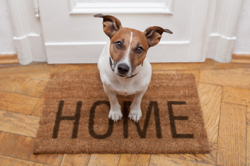 Purchase Autoslide for your home, and pets, today! #Technology #Tech #Home #Pet #Dogs #Doors