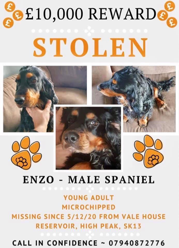 #FindEnzo #Stolen