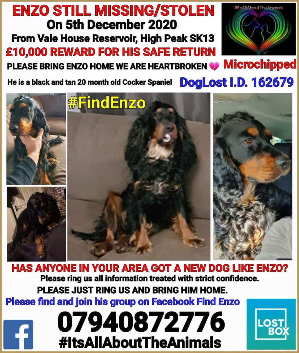 #findEnzo Where are you Enzo !