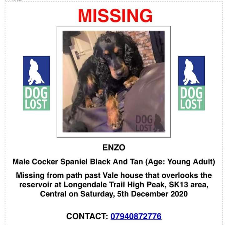 What a handsome boy!! Id want to keep him too but hes not mine. He definitely isnt yours either! How would you feel if someone spirited away a member of your family? Then do the right thing and bring Enzo home 🙏🐾 #findEnzo @Lorrain90964806 @BethRees2 @AlanDaffern @RossKemp