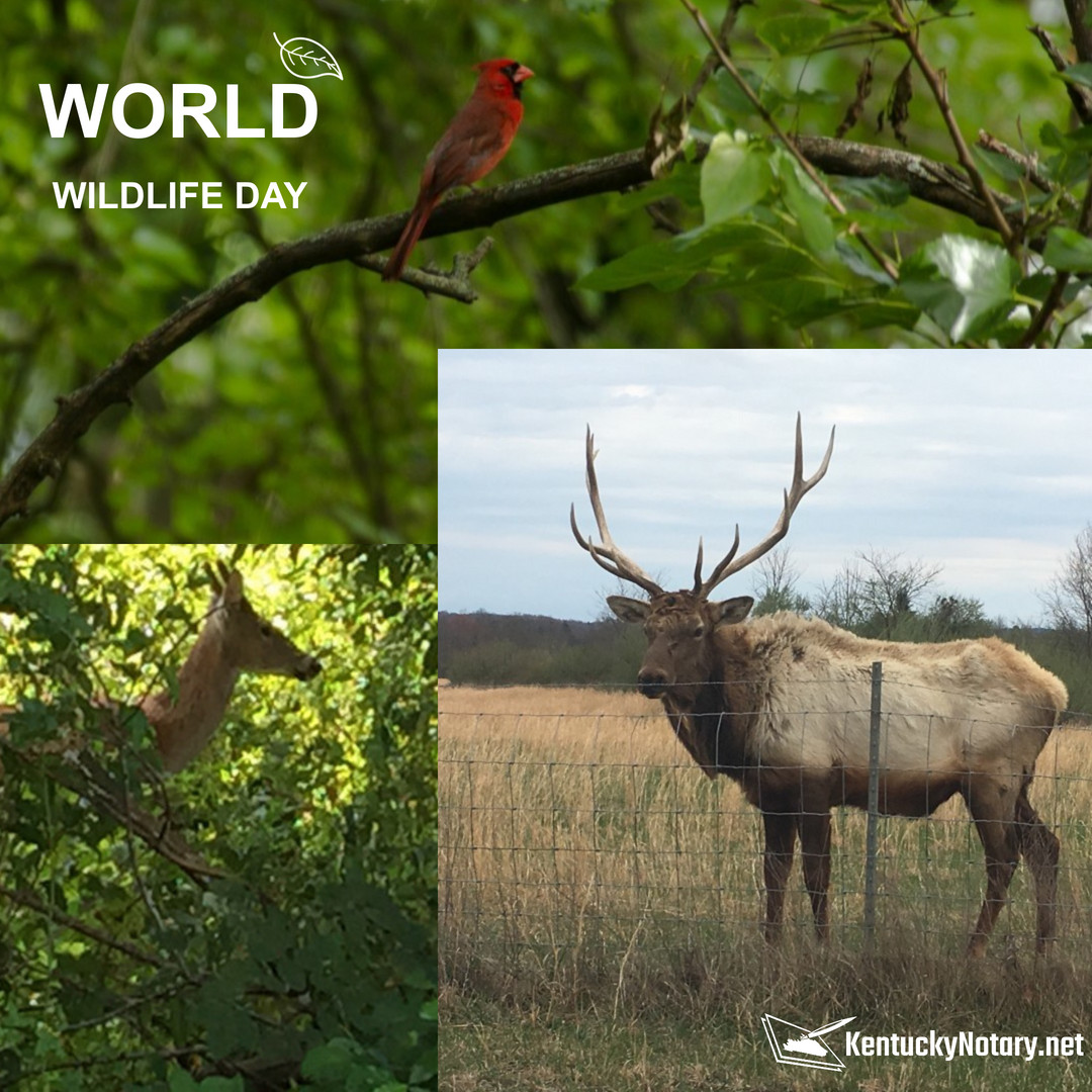 Wednesday, March 3rd is #worldwildlifeday and we sure do have wildlife in the Bluegrass State! This is just some of the animals, you should see the adults! 🥁😄🦌 What's your favorite wildlife animal? #kentuckynotary #mobilenotary #loansigningagent #remoteonlinenotary