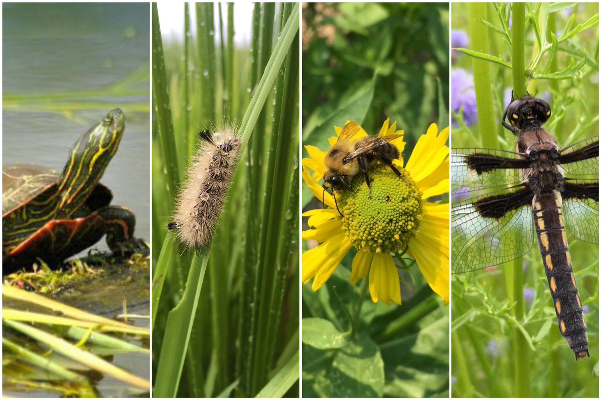 DYK the Port manages more than 900 acres of wetlands and natural areas in the Portland metro region? Get a behind-the-scenes tour of the bees, frogs and diverse wildlife that we help protect and sustain:  #WorldWildlifeDay