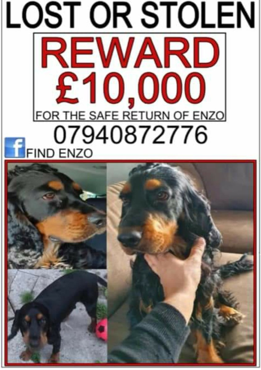 ENZO #FindEnzo Male #CockerSpaniel Young Adult Black and Tan Microchipped #Missing 05 Dec 2020 path past Vale house that overlooks the reservoir at #Longendale Trail #HighPeak #Derbyshire Central SK13 doglost.co.uk/dog-blog.php?d…