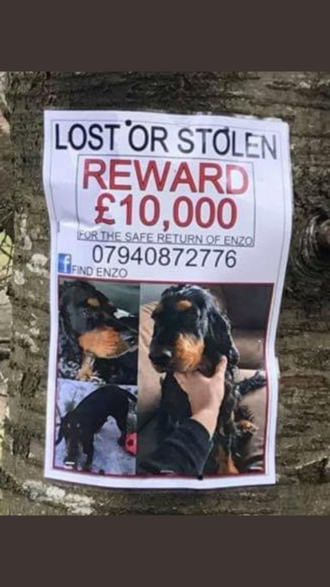 #DERBYSHIRE #POLICE are waiting for your ☎️ Do the right thing . Ring owners . No questions asked . Hand Enzo over . Thank you 🙏 🙏🙏🙏🙏#FindEnzo #FindEnzo 🆘🆘🆘🆘🆘🆘🆘🆘🆘🆘🆘🆘