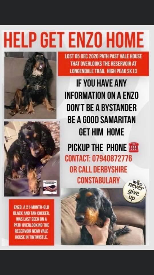 #findEnzo another #Spanieltheft / #gundogtheft When will it end? What sort of ppl do this.... to families, to dogs Heartache & fear for both nightmares & tears @BorisJohnson @pritipatel PLS PLS HELP BY A RT #SK13 HE COULD BE ANYWHERE facebook.com/groups/8130875…