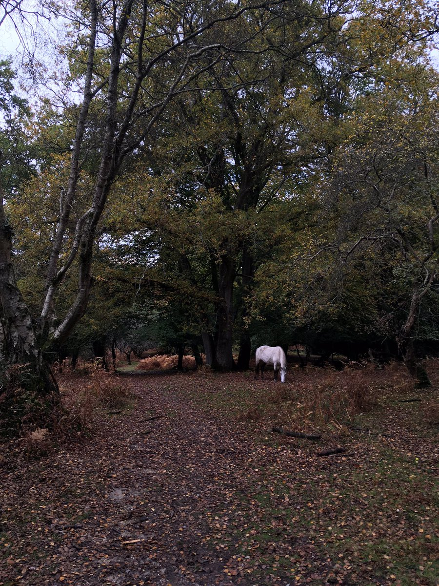 I learned that the theme for #WorldWildlifeDay 2021 is 'Forests and Livelihoods: Sustaining People and Planet' so I went scrolling through my photos - first up the New Forest: an amazing example of sustainable use of grazers to maintain livelihoods and protect natural processes