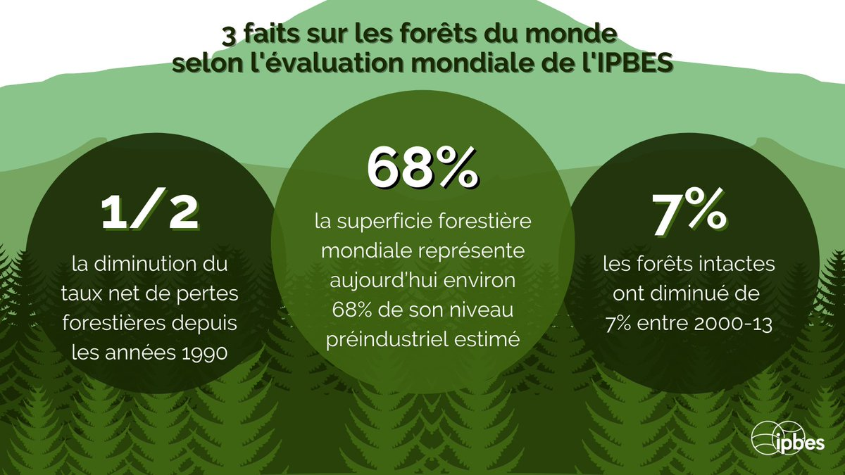 #DidYouKnow that the extent of tropical & subtropical forests is📈within some countries, as well as the global extent of temperate & boreal forests —@IPBES #GlobalAssessment #WorldWildlifeDay #ForestsPeoplePlanet