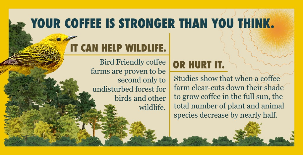 When you drink Bird Friendly® certified coffee, you brew a more biodiverse, sustainable world.  Celebrate #WorldWildlifeDay by learning more about Bird Friendly coffee farms and how they protect vital bird habitat while supporting farmers at