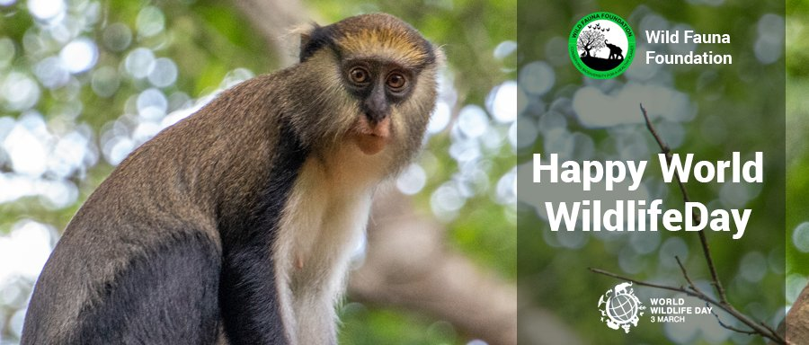 We cannot let today end without wishing our neighbors a Happy #WorldWildlifeDay . We share this planet with all these wonderful creatures and systems upon which we depend on for our survival. It's our responsibility to sustain all life on earth for posterity. Together #ForNature