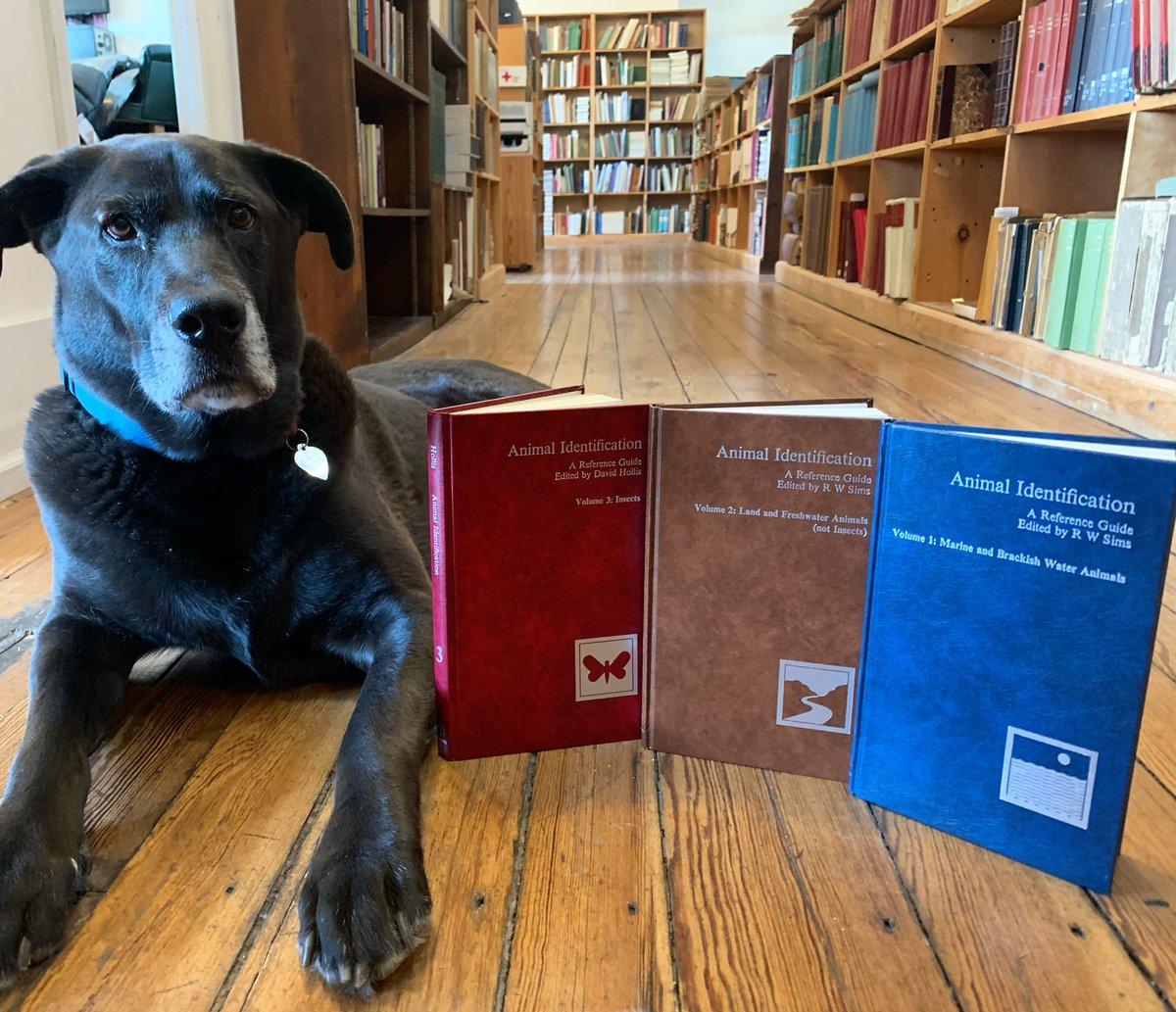 "It's #WoofWednesday and #WorldWildlifeDay! Charlie's posing next to ""Animal Identification, A Reference Guide"" from the British Museum, 1980    #oakknollbooks #oakknollpress #booksaboutbooks #dogsandbooks #dogs #books #animals #insects #wildlife"