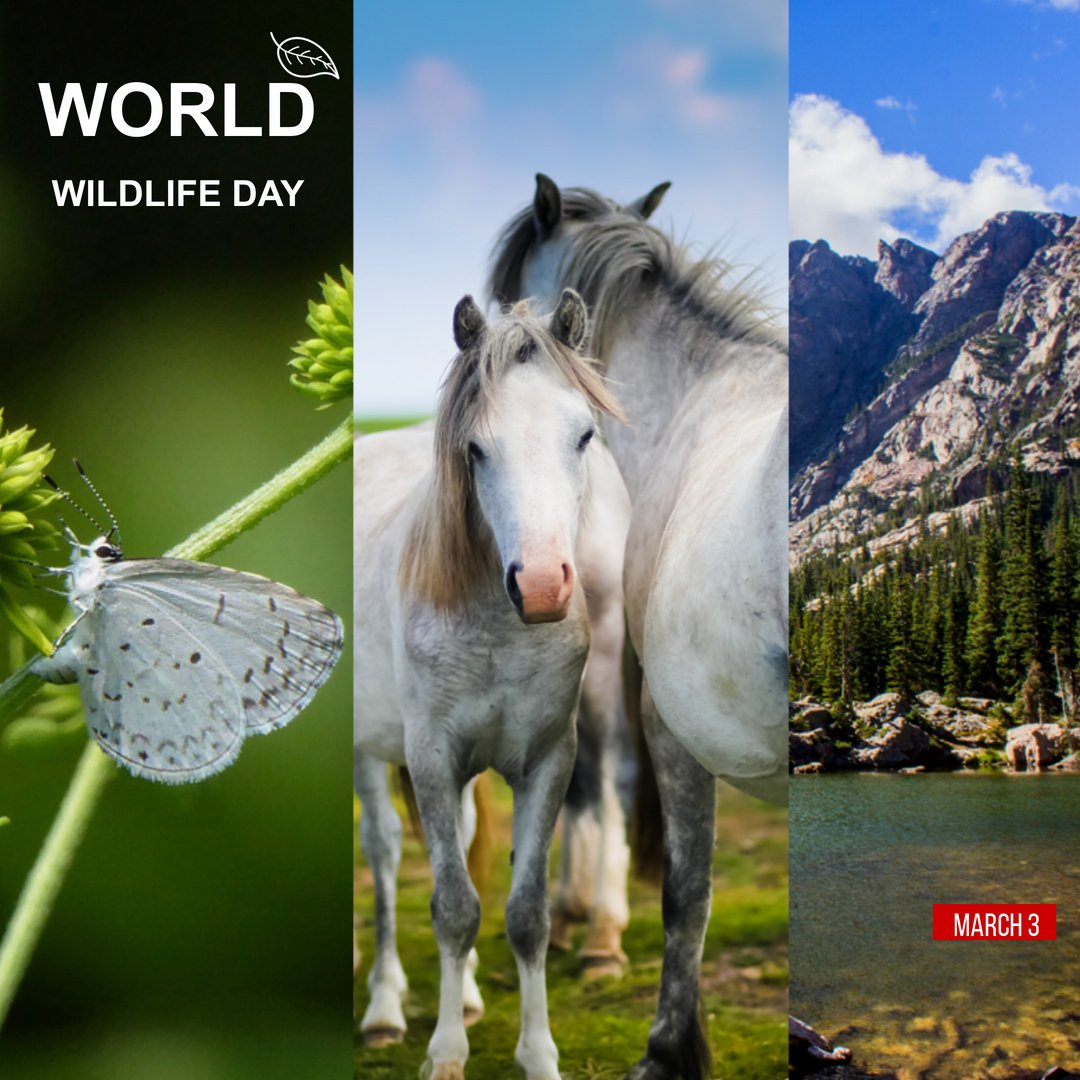 """""""We currently face a quadruple planetary emergency: a climate crisis, a biodiversity-loss crisis, an inequality crisis, and a global health crisis. Forests and forest communities are at the center of each of these challenges."""" ~ Leonardo DiCaprio #WorldWildlifeDay #WWD2021"""