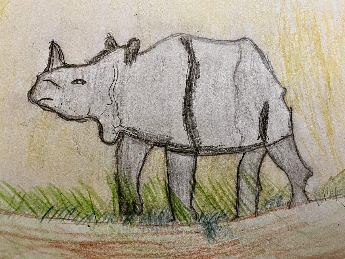Rhinoceros are a critically endangered species with less than 30,000 rhino living in the wild today. At the start of the 20th century, there were over 500,000. Human activity has caused this dramatic decline in rhino numbers. @boomerandjenLtd @RSPBEngland #COP26