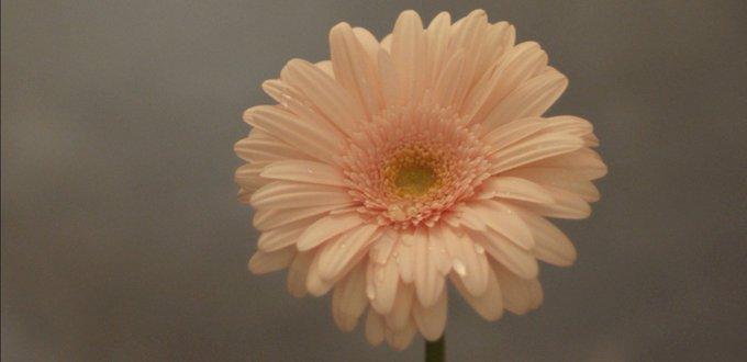 3.11 Then and Now Part3 hana wa saku yuzuru hanyu japan tohoku flowers will bloom earthquake tsunami