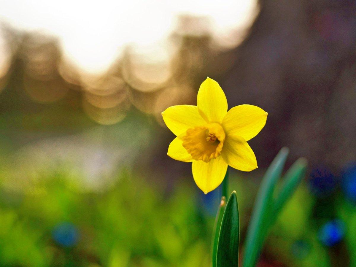 RT @bgv_online: Guten Morgen, ihr Lieben! 📷 Aaron Burden  #flowerphotography https://t.co/vK4DK2m6vi