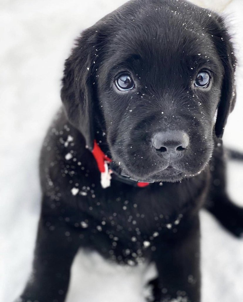Show me a picture of your pet and tell me where you're from..   I start with a random puppy to share the love.. ❤️  I'm from The Netherlands.. 🇳🇱