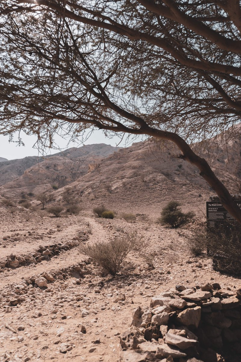 The desert can be a harsh place - come and learn a little bit more about the Wadi Caves during an educational archeological tour. Visit our website (link in bio) for more!  #الامارات #الشارقة #جوائز #سحب #ربح #UAE #Sharjah #mleiha