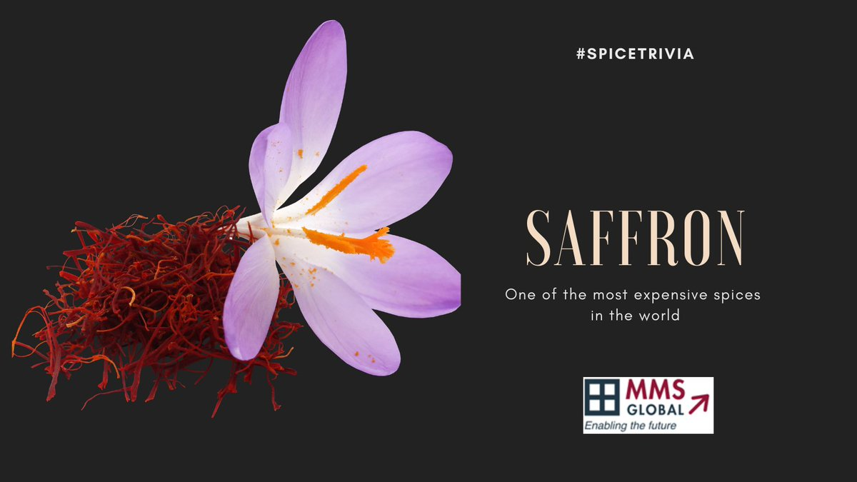 Saffron is one of the most expensive spices in the world! Read on:   #spices #saffron #Trivia #ThursdayThoughts #mmsglobal