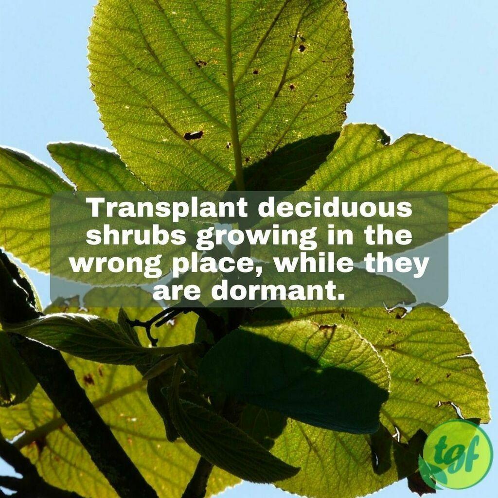 #RT @gardenerfriends: (Tumblr ) Transplant deciduous shrubs growing in the wrong place, while they are dormant.  #gardening #garden #gardeningtip #beautiful #nature #thegardenersfriends #greenthumb #green #gardenlife #lifesty…