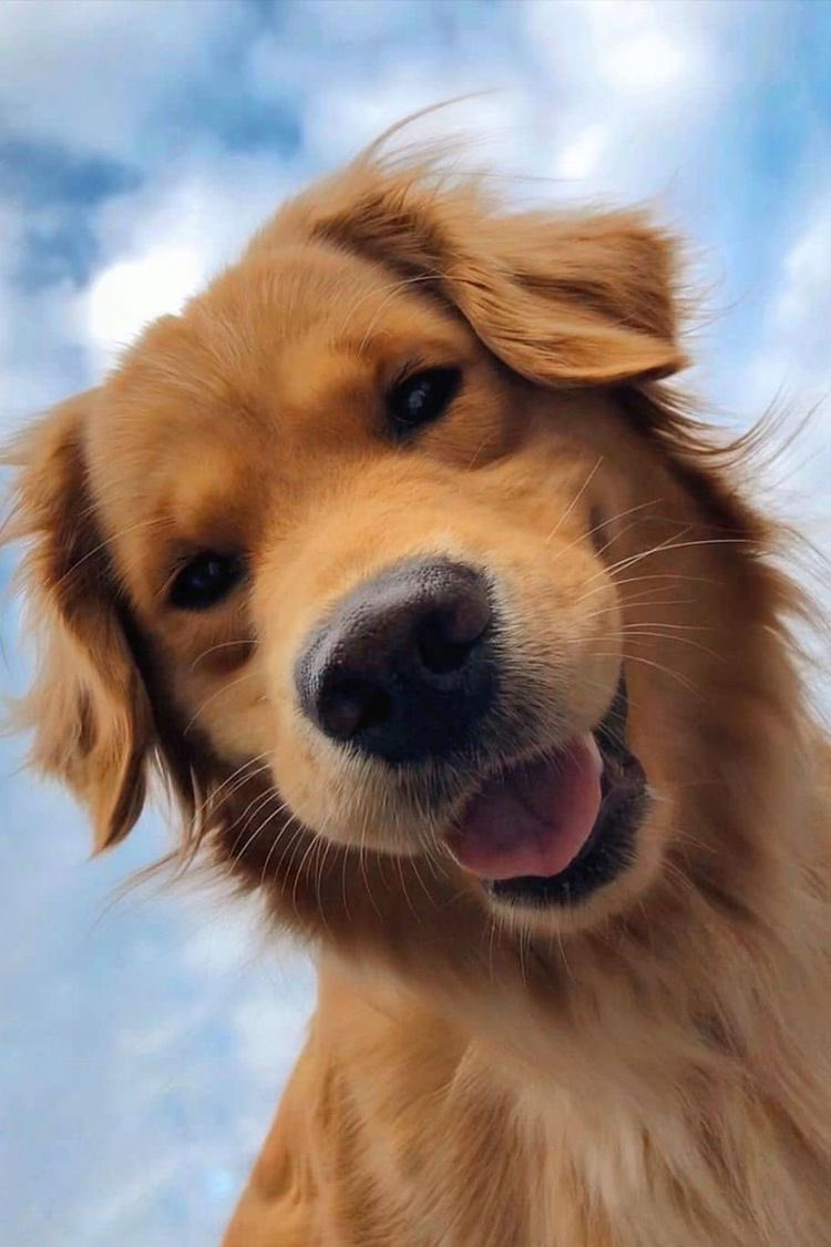 @ashemusic #askASHE which golden retriever pic is your favorite?