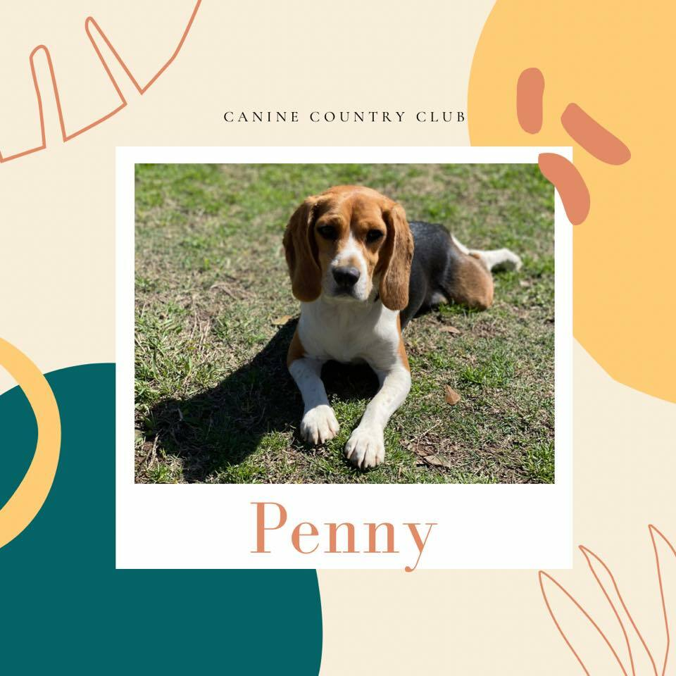 Whoever said diamonds are a girl's best friend never had a BEAGLE! https://t.co/Vjxqw8hBc6