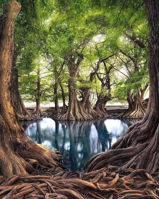 Nature's Beauty... Love's Eternal Beauty... #MagicTogether   Lago de Camecuaro Zamora.Mexico Photo by @pepe_soho