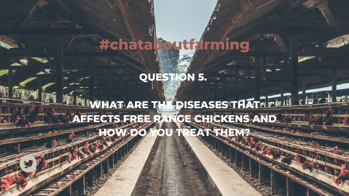 Question 5.   WHAT ARE THE DISEASES THAT AFFECTS FREE RANGE CHICKENS AND HOW DO YOU TREAT THEM?  #ChatAboutFarming