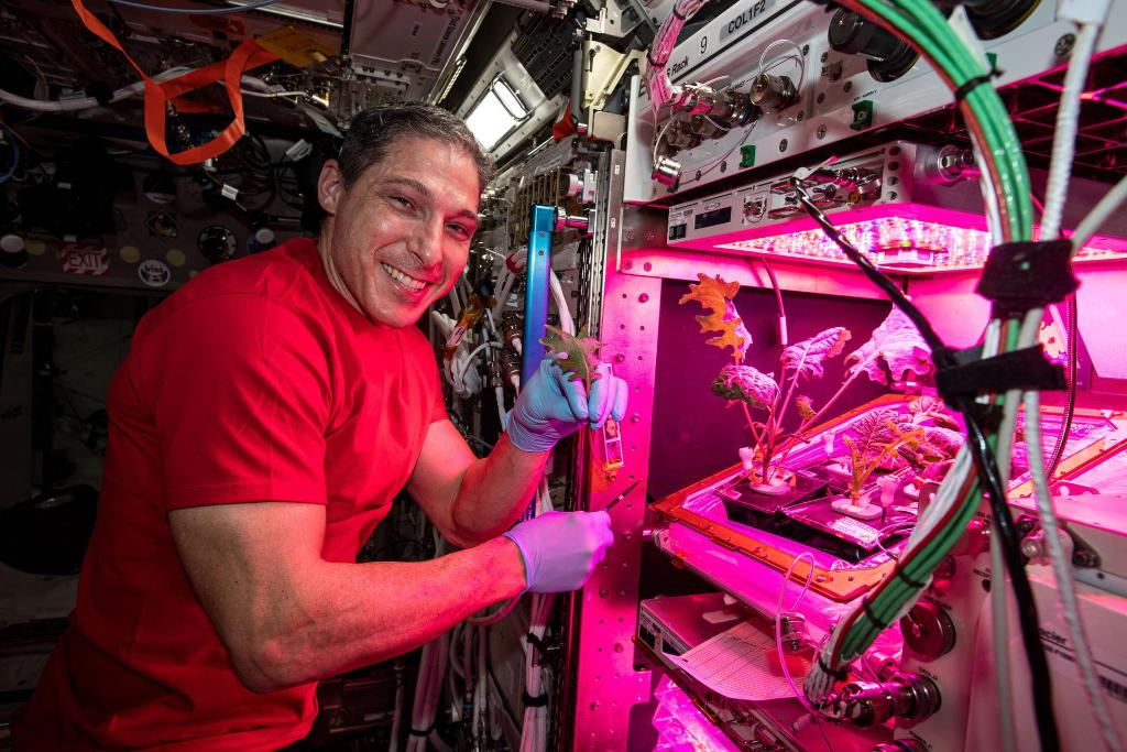 🥬 Did you know there's a garden on the @Space_Station? During his mission, @Astro_illini has harvested radishes, planted lettuce, & begun growing mustard greens and pak choi. The plants are a source of food, and a connection reminding the crew of Earth: