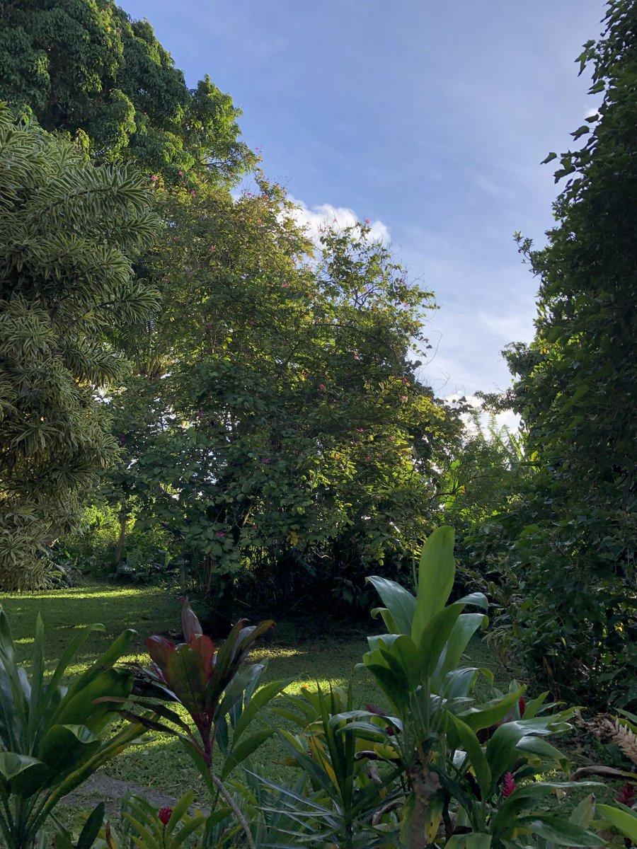 test Twitter Media - Beautiful and cool in Haiku. #cmweather #Maui #Haiku #Mauinokaoi https://t.co/2LesrdiyKh