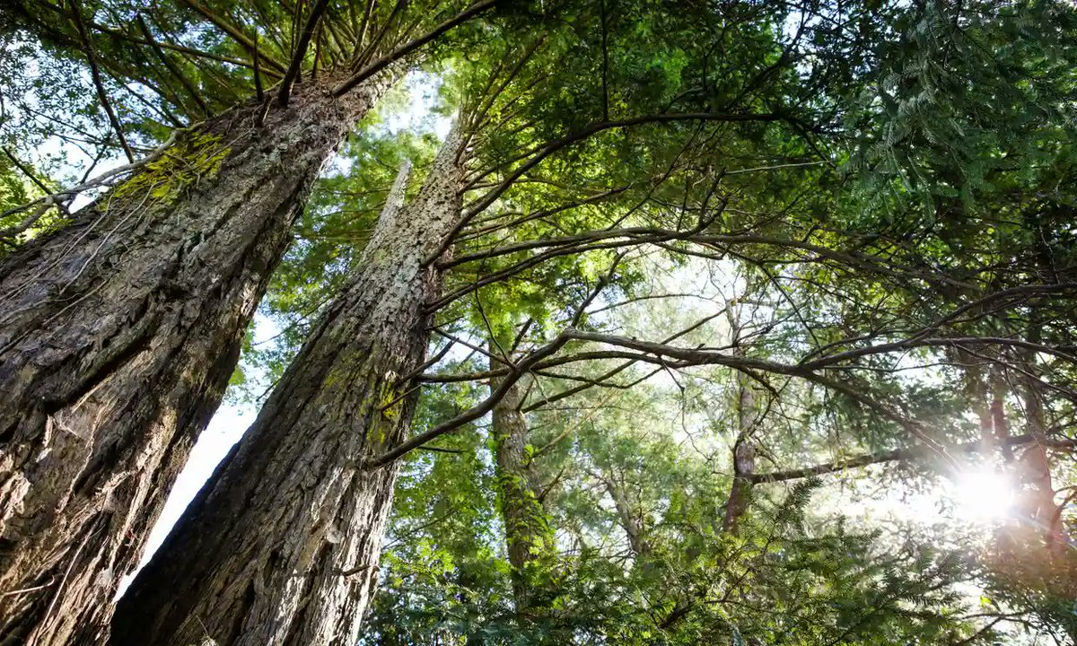 Research shows planting trees is one of the biggest and cheapest ways of taking CO2 out of the atmosphere to tackle the climate crisis:  @guardian #climatechange #energy